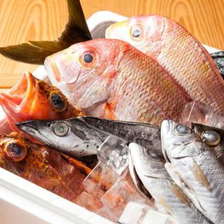高知から直送の新鮮な鮮魚!珍しいお魚も!
