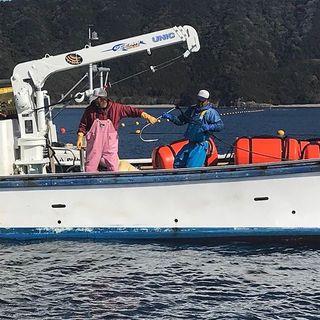 自社で漁業を行う三重の魚料理
