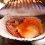 緒方 - 赤貝 紐
