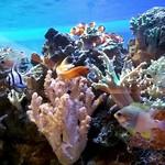 82355361 - 熱帯魚もみれて優雅なひととき