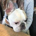 CALIFORNIA DINING THUNDER STEAK&HAMBURGER - 愛犬ハチも一緒にテラスでランチ