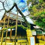 外苑休憩所 - 2018年3月15日(木)の靖國神社境内の桜の標本木。       開花はまだ。