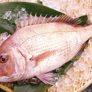 天然活け〆の鮮魚
