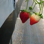 イチゴ ワールド - 料理写真: