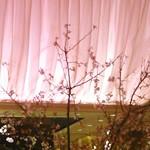 82661841 - 桜色の店内