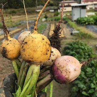 自家農園の新鮮野菜たっぷり◎