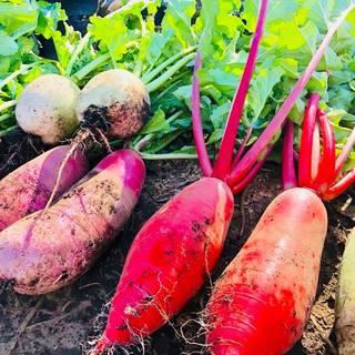 鎌倉野菜☆有機野菜の最高峰☆本来の野菜の美味さが味わえます♪