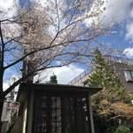 ベアポンド エスプレッソ - お店近くの真竜寺様の桜の下には→
