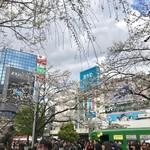 ジャン・フランソワ - ハチ公広場は枝垂れ桜1本とソメイヨシノ2本でしょうか