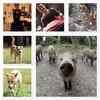 オステリア タナロ - その他写真:猟犬日誌&タナロ
