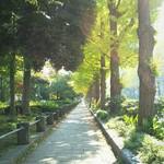 イル・ジャルディーノ - 前のイチョウ並木