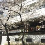 グローブカフェ - グローブカフェから見える公園の桜。