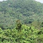 じゅごん - 世界的にも珍しいヤシの群落