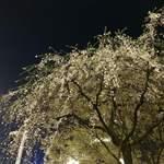 ジャン・フランソワ - 2日後のハチ公広場の夜桜2