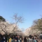 むぎとオリーブ マーチエキュート神田万世橋店 - 上野公園の桜の様子、ほぼ満開に近い感じ…、そして人、人…(3/25時点)