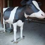 8308135 - 乳しぼりを疑似体験できるミニ乳牛。カワイイw