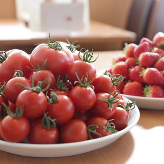 こだわりの栽培で育った自慢のトマト、いちご、メロン