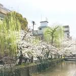 83122635 - 高瀬川の桜が満開