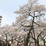 一幸庵 - 播磨坂の桜並木