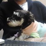 肉ビストロ&クラフトビール ランプラント - 愛犬の指定席♪
