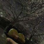 サポーレ - 山崎川の夜桜と桜もち
