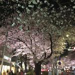 ロージナ茶房 - 国立の夜桜