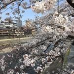 83325365 - 鴨川の桜