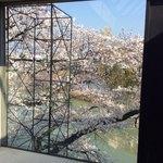 83329066 - 今年の豊中の桜❣️