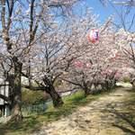 米増 - 住んでた頃は、ここで毎年花見弁当❣️