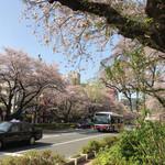 天ぷら  やました - 国立の桜並木
