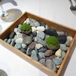 83411905 - ランチコースアミューズ:小石と苔