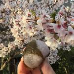 山口屋 - 家の桜の下で(3/31)