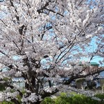 83483694 - 垂水の桜