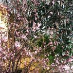 カフェ ラ・ボエム - 階段で♡桜のお出迎え♡