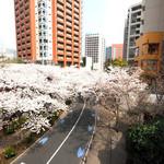 la Brianza - 目前の六本木さくら坂の桜