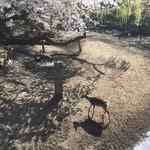 83606369 - 桜と鹿