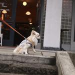 ナス・ショウゾウ カフェ - テラスも入店不可だったので、記念にお店の前で撮影