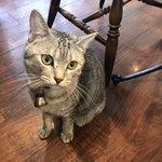 83715860 - お店には、こんなにキュートな猫ちゃんがいます。