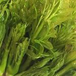 じんりきダイニング WABITO - 2018年春の野菜。とれたてタラの芽。 やはり天ぷらでご提供いたします。お塩をちょんとつけて、春のほろにがあま〜いをお楽しみください。