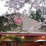 RANDY - 満開の桜の下で〜♬