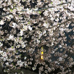 バビーズ ニューヨーク アークヒルズ - 桜の向こうに東京タワー