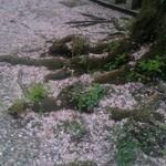 スパイシータンドール - (おまけ)桜の絨毯