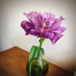 83943060 - テーブルのお花にほっこり