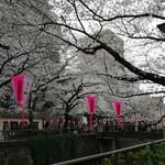 香食楽 - 目黒川の春1