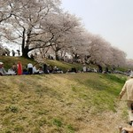 83954885 - 桜のトンネル1.2キロあるみたい('д' )