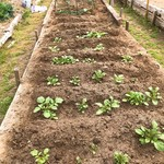 ブリック - 畑で野菜も育ててます!