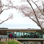 ロマン - 桜のロマン♡