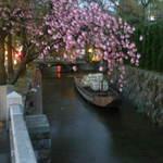 がんこ 高瀬川二条苑 - 高瀬川・八重桜と舟