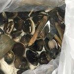 ブーランジェリー ベンケイ - 今回もハマグリとマテ貝が大漁です(^^)