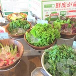 リバーズガーデン - 鮮度が命!孫野菜